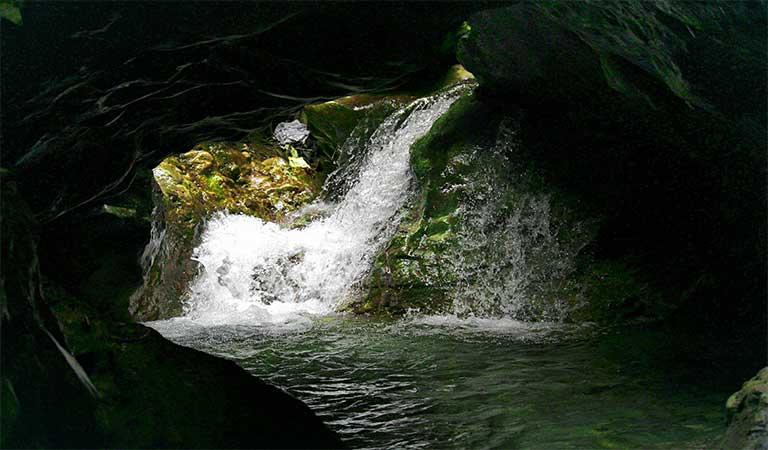 Robbers Cave Dehradun, GuchhuPani Timings, Entry Fee, How to reach